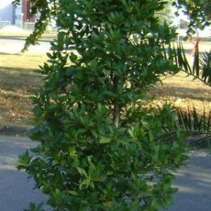 Location plantes - Réf : 7050